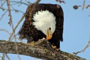 Eagle Weekend 188rev