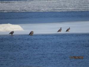 Ice eagles 006